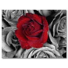 Αφίσα (τριαντάφυλλο, κόκκινος, watter, πάθος, αγάπη)